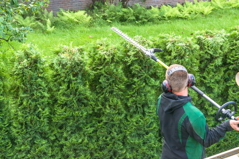 Hedge cutting petrol hedge trimmer.